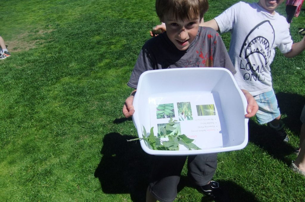 Boy holding tub of collected plant samples