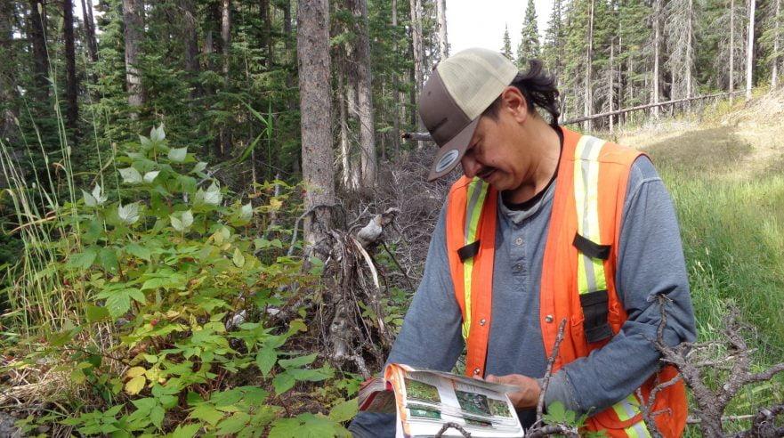 A First Nations community member sampling vegetation